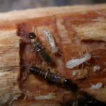 hiring a crawlspace or pest control company