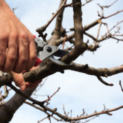 tree trimming, trimming branches, branches